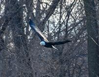 Des Moines River, Wildlife