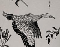 Naturalis Harmonia | Scientific Illustration