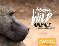 20 Amazing Wild Animals - Free Photos