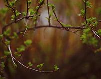 Весна в деталях | spring