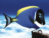 Aqua Vega Aquarium, Print