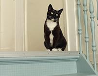 Portraits of the 'Ditjes & Katjes' cafe cats