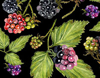 Seamless pattern of watercolor image of ripe blackberry