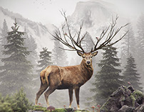 Deer photo manipulation