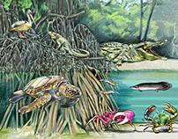 Manglar Tajamar, ilustración revista Quo Mexico