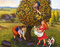 récolte des pommes