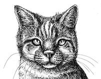Pet Portraiture Part 2