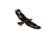 PROUDLY SOARING BROWN EAGLE EMBROIDERY DESIGN