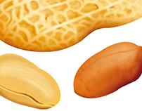 Peanut Illustration