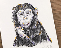 Chimpanzee illusration