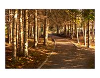 """Eric Copeman - """"Pathway"""""""