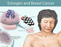 Estradiol Scientific Visualization Poster