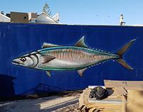 Spanish Mackerel at Coast Port Beach