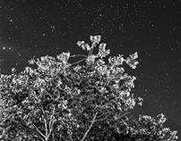 Photography (Night & Morning Sky)