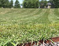 Content Writing: Caring for Your Lawn in Summer Heat