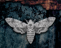 Moth (2017)