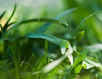 Macro Grass Blades