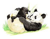 MOMMY PANDA