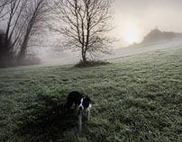 Merlin the Dog