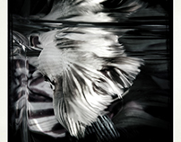 RAMBO FISH