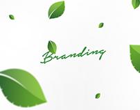 Branding Terra Verde
