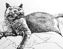 Curiosity Killed the Cat (Exploration of Invisibility)