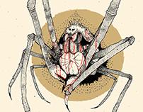spidercrab