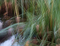 Perceptions Of A Pond - Volume Ten