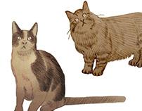 Sketches & Ideas - Animals