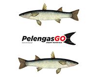 Логотип и пресс волл для компании PelengasGO