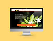 Agrumes du Maroc - Web Design