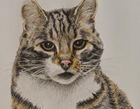 Kat portret / Cat portrait
