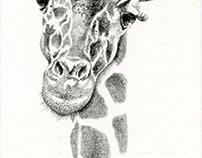 Book Giraffe