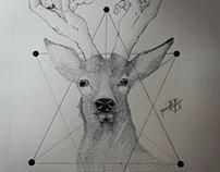 Ilustración, moose