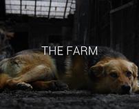Photography - The Farm