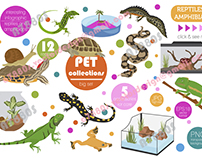 Pet reptiles and amphibians set