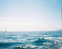 denizler, karalar, kediler ve köpekler