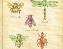 Bumble Bee, European Hoverfly, Dragonfly, Hlalactid Bee