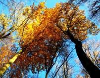 Last of October