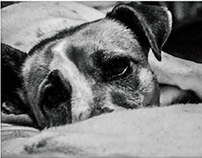 Pet Photography,Dogs