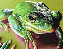 Colored Pencil Frog Drawing