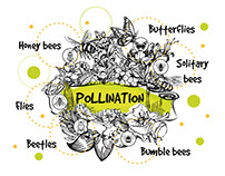 Pollinator Passage additional graphics