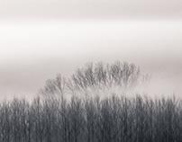 Fog under the blue sky of the Empordà.