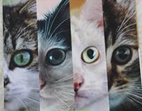 Phibsboro Cat Rescue Calendar 2016