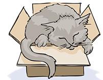 Illustration for Children's Poem - Cats sleep anywhere'