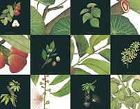 文化館所易讀導覽手冊:芝山生態綠園 植物插畫