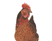 Science Illustration - Animals