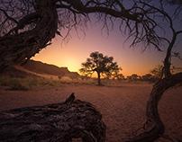 Trees of Namibia