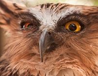 Bird - Animal Photography