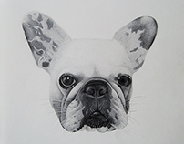 French Bulldog: Gara